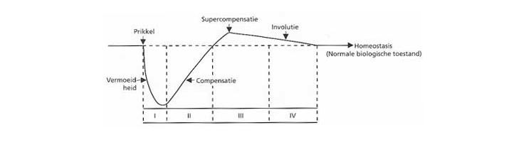 supercompensatie-curve