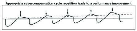 supercompensatie-cycli