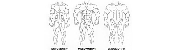 ectomorf endomorf mesomorf